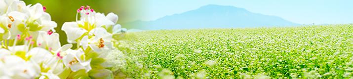椛の湖そばの花祭り