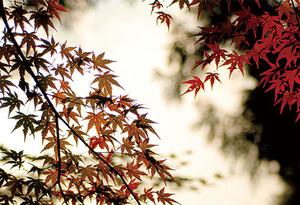 yumori5.jpg